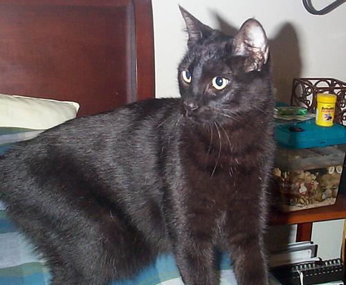 kitty11